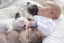 bebek-puppy