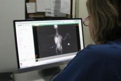 Papağan Bilgisayarlı Röntgen inceleniyor